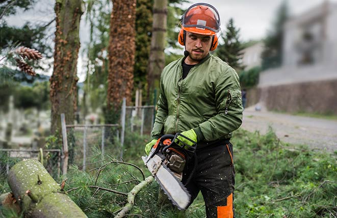 Canberra Tree Removal Men