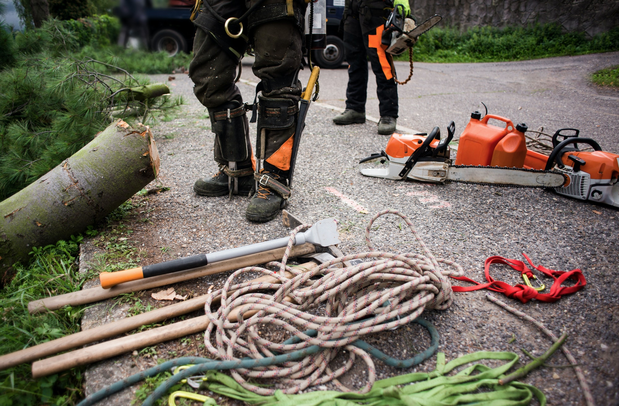 Tree Removals Canberra